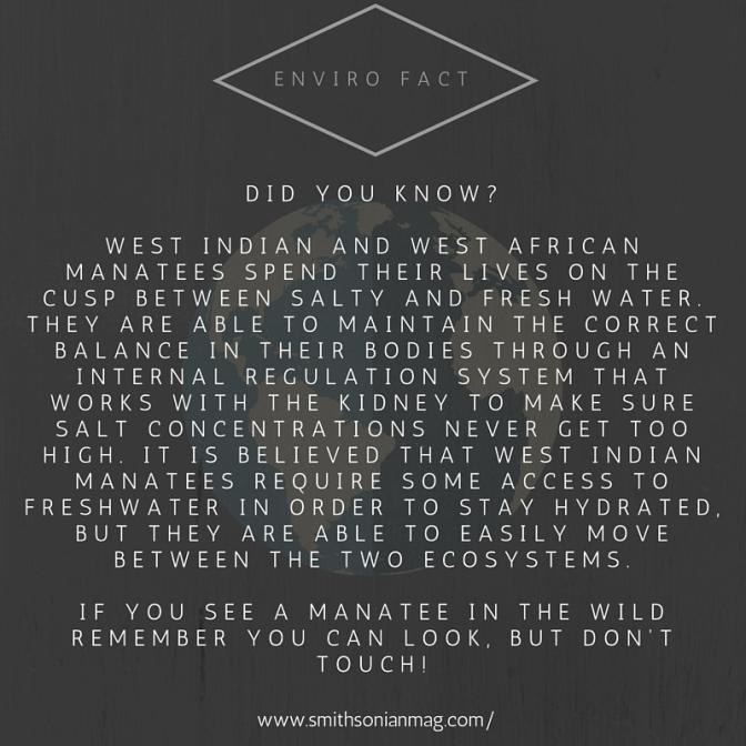 Enviro fact (3)