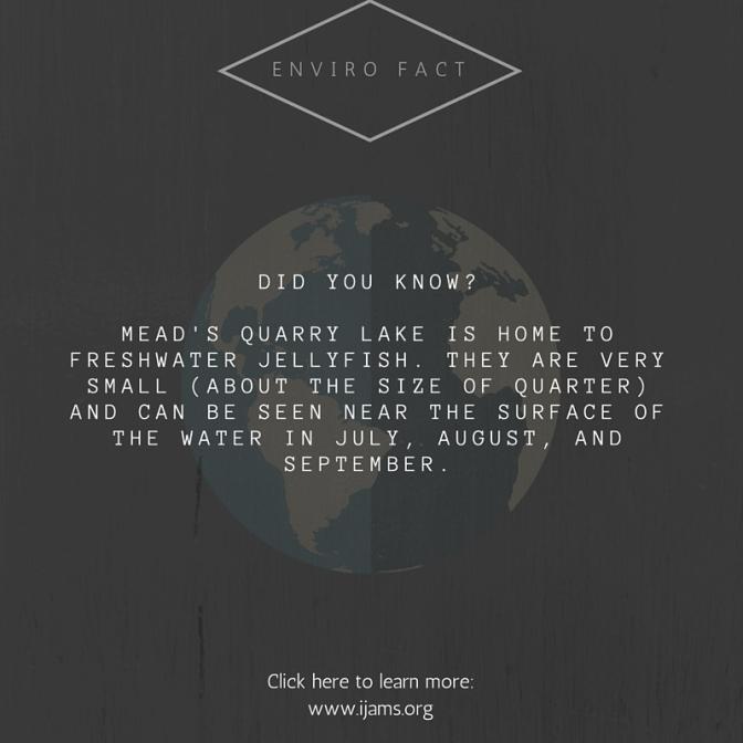 enviro fact (8)