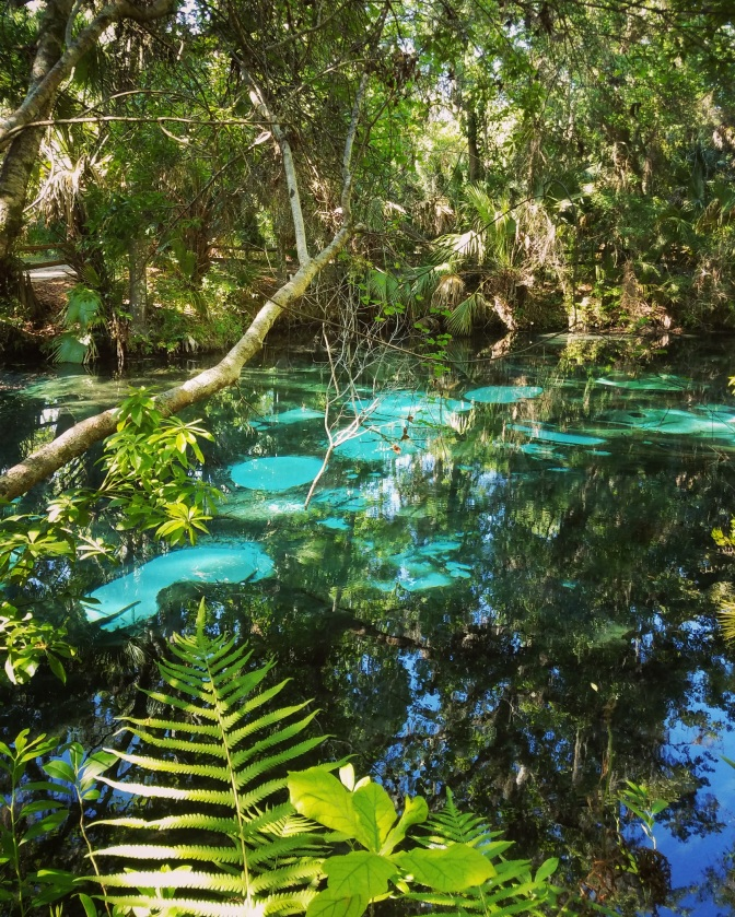 Fern Hammock Springs in the Ocala National Forest, Silver Springs, Florida