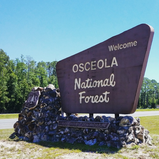 Osceola National Forest, Olustee, Florida