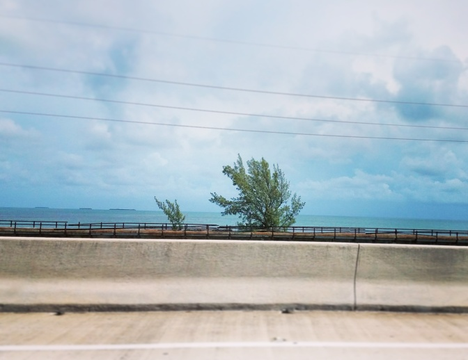 Fred the Tree, Seven Mile Bridge